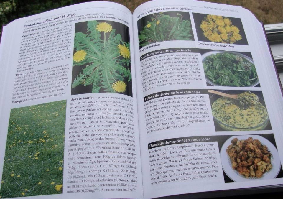 Resultado de imagem para plantas alimentícias não convencionais panc