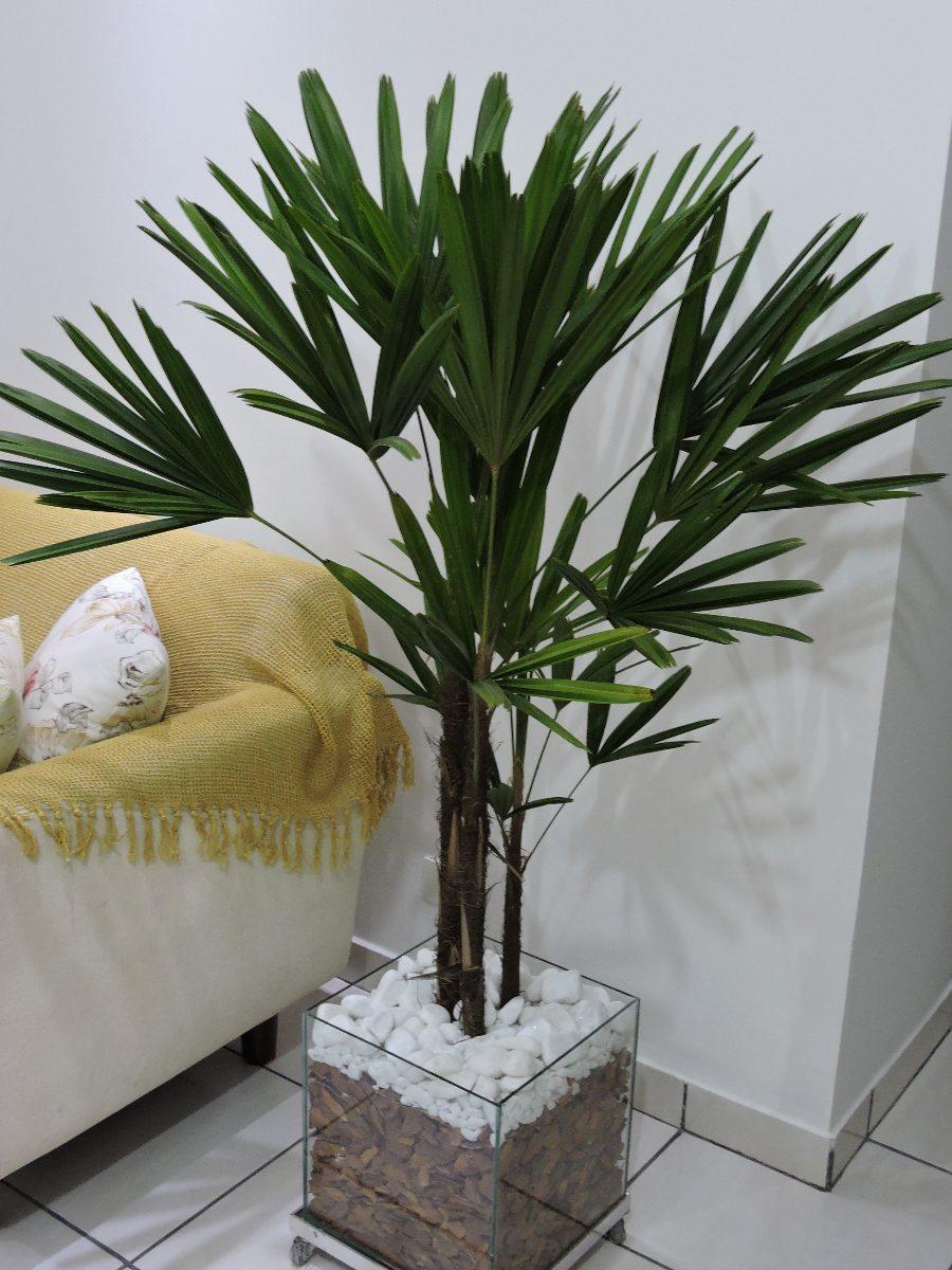 Vaso De Planta Ornamental Palmeira Rfia Em Cachepot 40