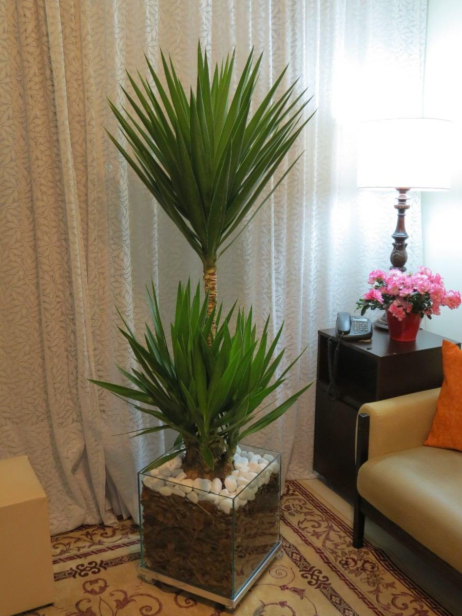 Yucca Cachepot De Vidro 35x35x35cm Natural Para Varanda