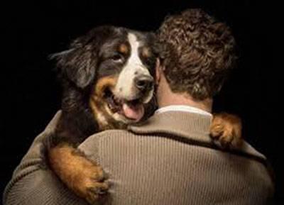 Ley proteccion derecho animal recolectan firmas-huaralenlnea 22