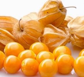 El aguaymanto fruta contra el envejecimiento y problemas bronquiales Huaralenlinea.com