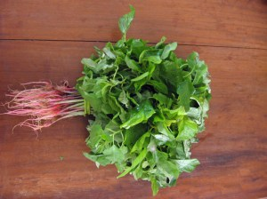 Pigweed is cooked and eaten in the Congo