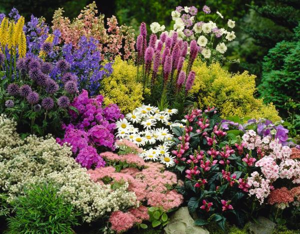 Getting the best out of your Perennials Suttons