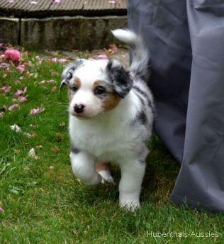 Dakota 6 Wochen