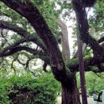 photos of new orleans area