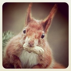 Nut? Squirrel!