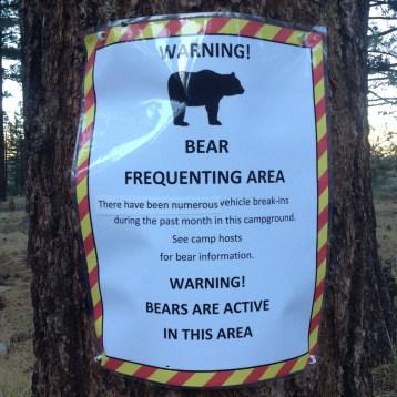 Beware the bear!