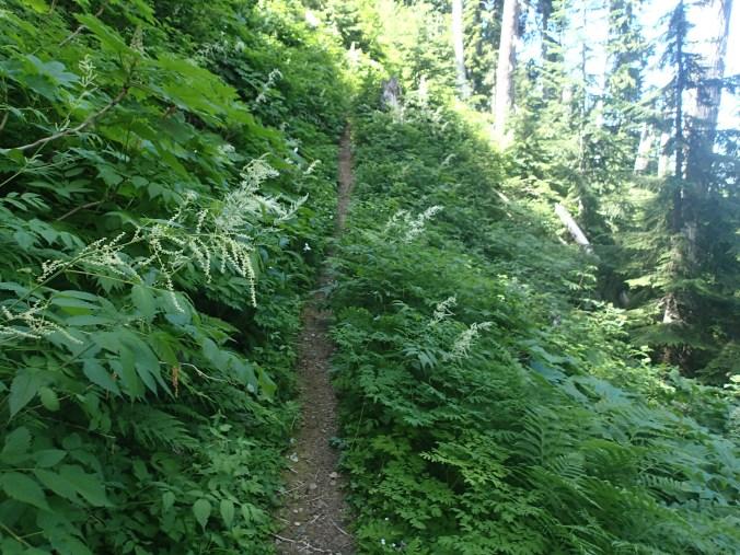 Wonderland Trail Overgrown By Brush