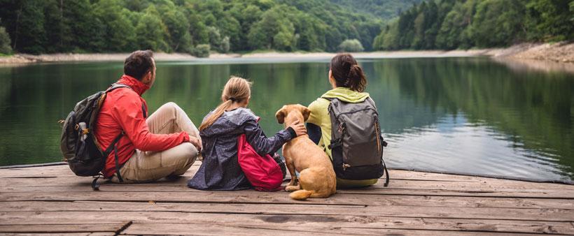 Pendant vos vacances, faut-il laisser votre chien à la maison ou partir avec lui?