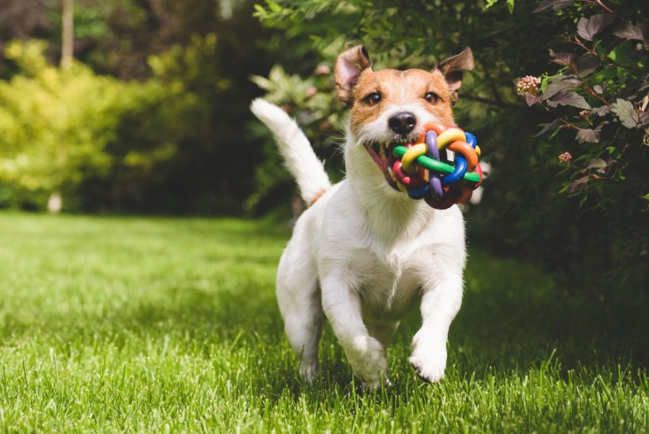 Healthy happy dog playing with a ball - Pet Insurance helps to give them their best life