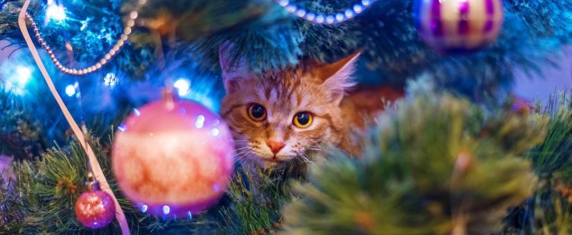 Un arbre de Noël à l'épreuve des animaux de compagnie