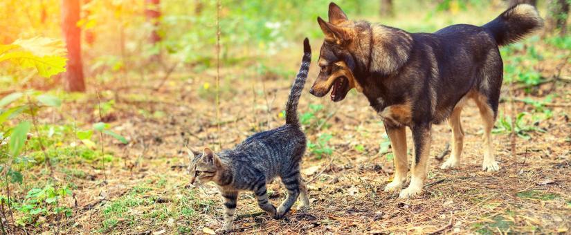 Pourquoi nous aimons nos animaux de compagnie et pourquoi ils nous aiment