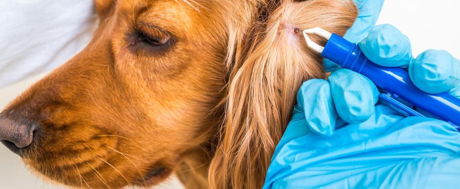 Protéger animaux de compagnie parasites