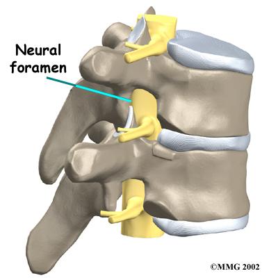neural foramen