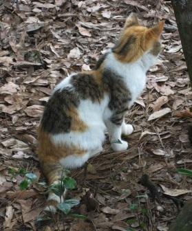Scoliosis_Kitty