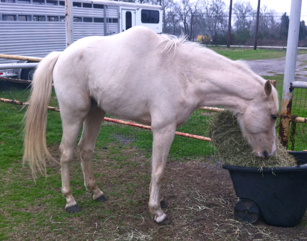 horse with scoliosis
