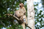 Animales más graciosos fotos premiadas (28)