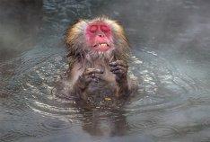 Animales más graciosos fotos premiadas (3)