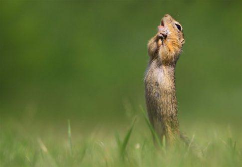 Animales más graciosos fotos premiadas (9)