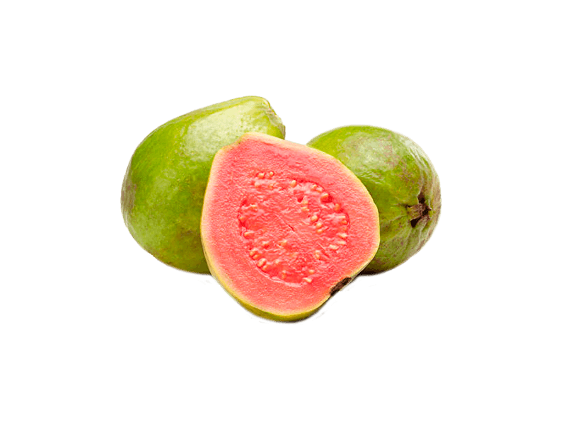 Guayaba Huerta Tropical