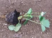 Planta de vivero