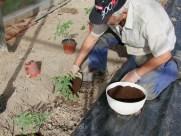 Añadiendo humus de lombriz