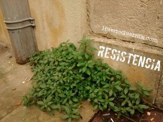 una planta saliendo del suelo de un edificio