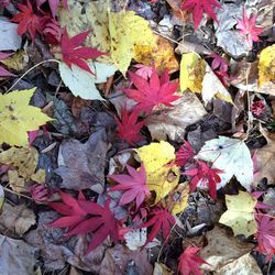 suelo de coloridas hojas de otoño