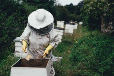 SOS. Salvemos a las abejas