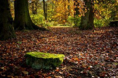 precioso suelo de bosque cubierto de hojas