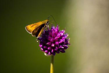 una mariposa en una flor