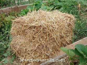 un fardo de paja en un huerto
