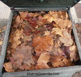 hojas de arbol en el compost