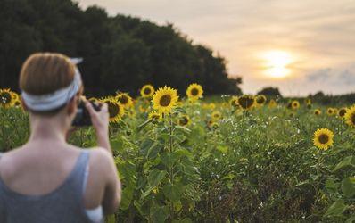 chica sacando fotos a un campo de girasoles