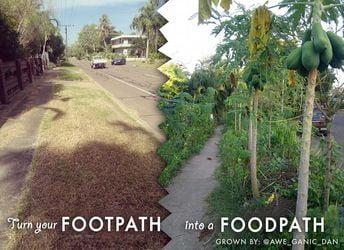 calle cultivada con árboles frutales y plantas comestibles