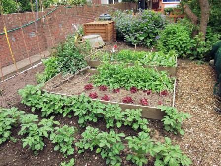 huerto urbano ingles. 3 bancales que hacen rotación de cultivos