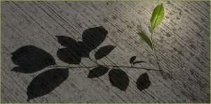 una planta y su sombra