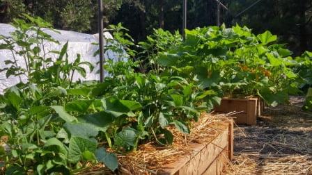 mesas de cultivo e invernadero