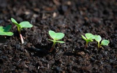 Tierra fértil cuidando el humus del suelo.