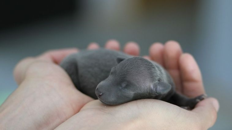 Tiny Puppy in hand