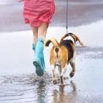 《おすすめ商品》世界初!雨の日のワンコのお助けグッズ!!