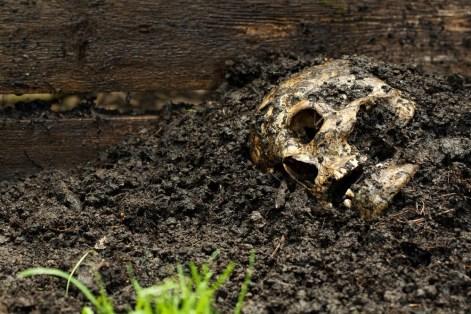 body_farm_skull.jpg