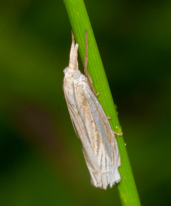 Moth 22
