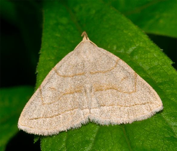 Moth 23