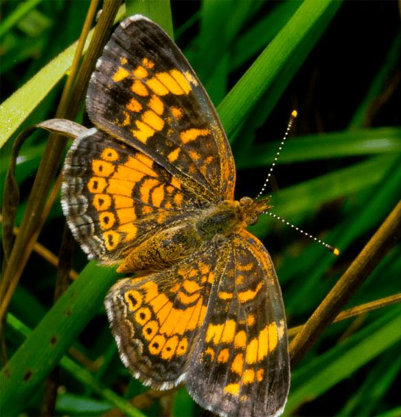 Butterfly 27