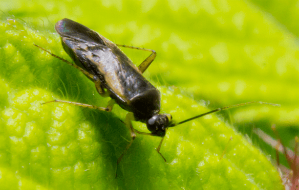 Insect 317