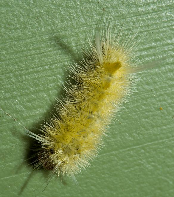 Caterpillar 117