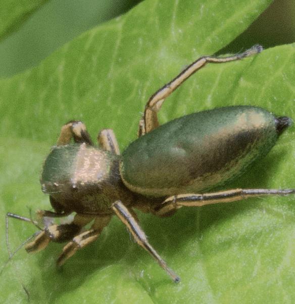 Spider 143