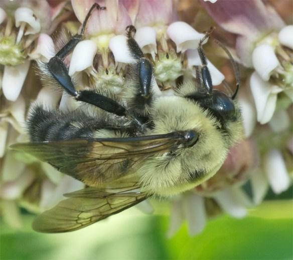 Bee 205