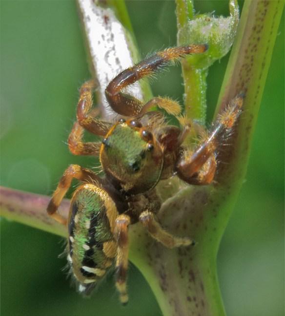 Spider 249